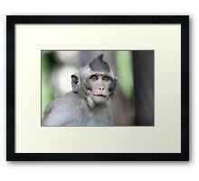 Wise Monkey Framed Print