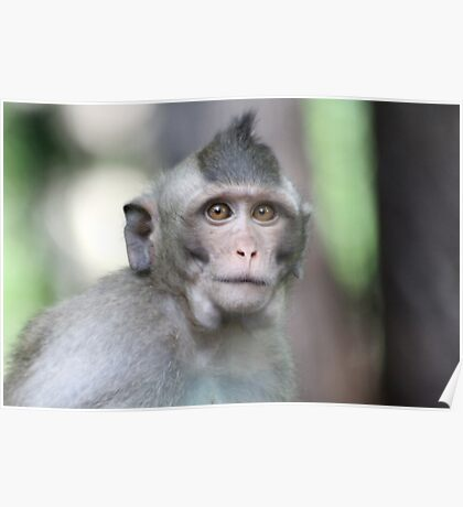 Wise Monkey Poster