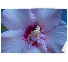 Purple Rose Of Sharon Poster