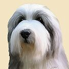 Bearded collie by Cazzie Cathcart