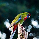 Little birdy by Mick Duck