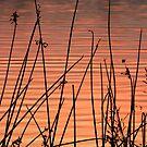 Lake Sunset by Lisa Holmgreen