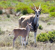 Mother and child - Eland in Africa by franticfish