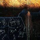 Forgotten Forest 1 by Alexandra Muresan