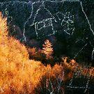 Forgotten Forest 2 by Alexandra Muresan