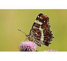 The Map Butterfly Photographic Print