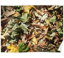 Background of green, yellow and brown maple fallen leaves Poster