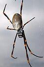 itsy bitsy spider by miroslava