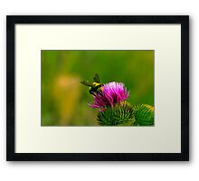 BUMBLE BEE. Framed Print
