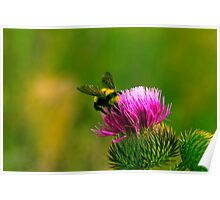 BUMBLE BEE. Poster
