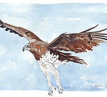 Martial Eagle {Polemaetus Bellicosus} by Maree  Clarkson