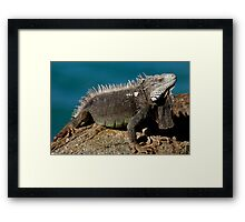 So I'm Grumpy - Get Over It! Framed Print