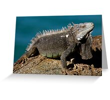 So I'm Grumpy - Get Over It! Greeting Card
