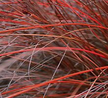 Red Sedge by Steve Walser