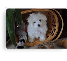 """""""Mischief""""  puppy in basket Canvas Print"""