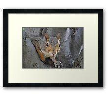 """Social Squirrel""-Washington, D.C. Framed Print"