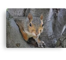 """Social Squirrel""-Washington, D.C. Canvas Print"