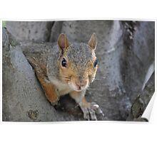 """Social Squirrel""-Washington, D.C. Poster"