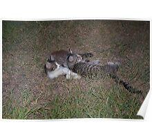 two kitten playing Poster