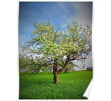 The Big Apple Tree Poster
