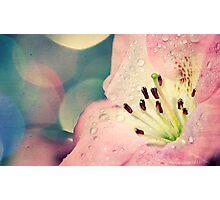 Simple Pleasures Photographic Print