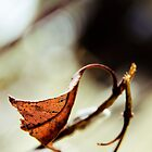 Shapes from autumn by Veikko
