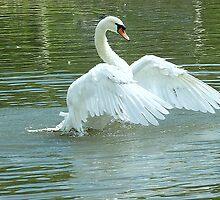 Wing power by Meladana
