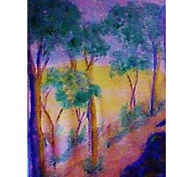 Eucolptus trees on slope, watercolor Photographic Print