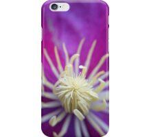 Purple clematis in bloom  iPhone Case/Skin