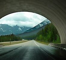 Wildlife Overpass by Jann Ashworth