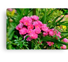 Lensbaby in pink Canvas Print