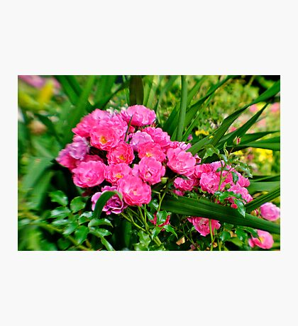 Lensbaby in pink Photographic Print
