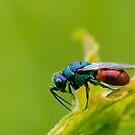 Gold wasp by Lifeware