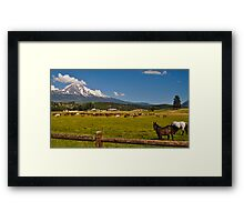 Shasta and Horses Framed Print