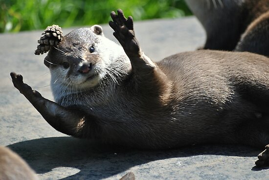Hey.............I can Juggle!!! by Dorothy Thomson