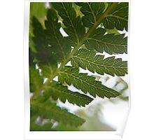 Tasmanian tree fern detail Poster