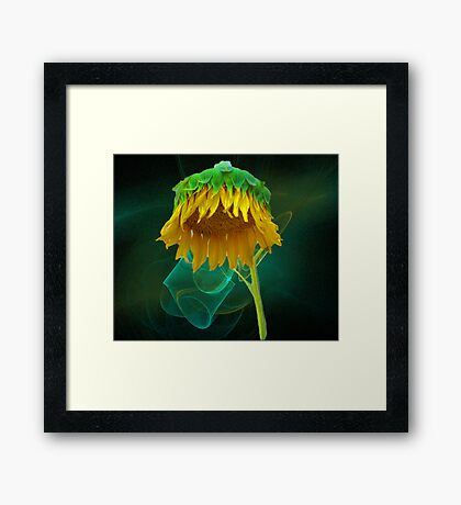 Golden Umbrella Framed Print