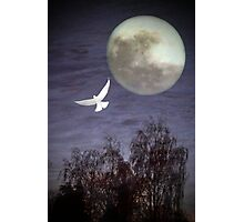 Peace and Serenity Photographic Print