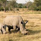South African White Rhino Mother & Calf by Gina Ruttle  (Whalegeek)