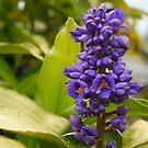 Violet Flowers by emxacloud