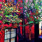 Summer Autumn in NYC by ShellyKay