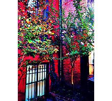 Summer Autumn in NYC Photographic Print