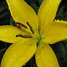 Bejewelled - Beautiful Lemon Lily by BlueMoonRose