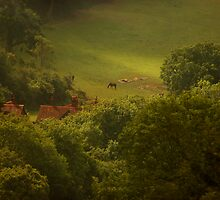 Horses. Roofs. North Downs. by DExPIX