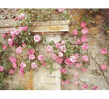 Watercolor Pink Climbing Roses Photographic Print