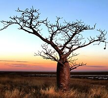 Boab Tree at Dusk by Mark Ingram Photography