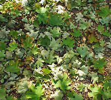 Top view of the green fallen maple leaves by vladromensky