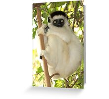 Winsome Verreaux's Sifaka Greeting Card