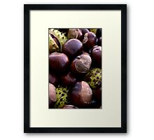 Heap of Shiny Autumn Horse Chestnut Seed Fruit Conkers Framed Print