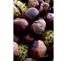 Heap of Shiny Autumn Horse Chestnut Seed Fruit Conkers Photographic Print